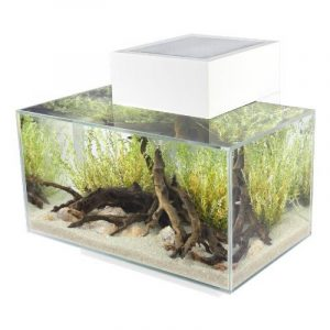 Kit aquarium débutant le comparatif TOP 3 image 0 produit